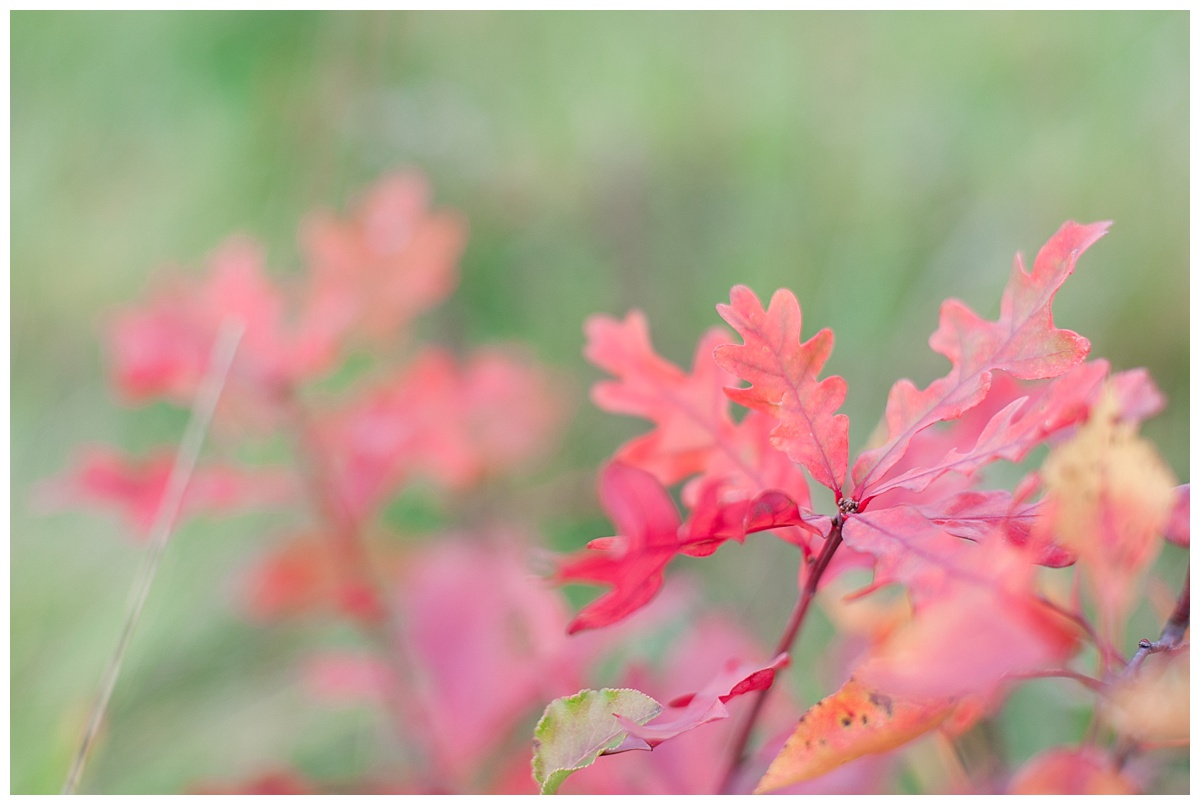 field fall family_0230